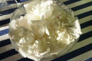 Vackra utblommade pionblommor i en skål