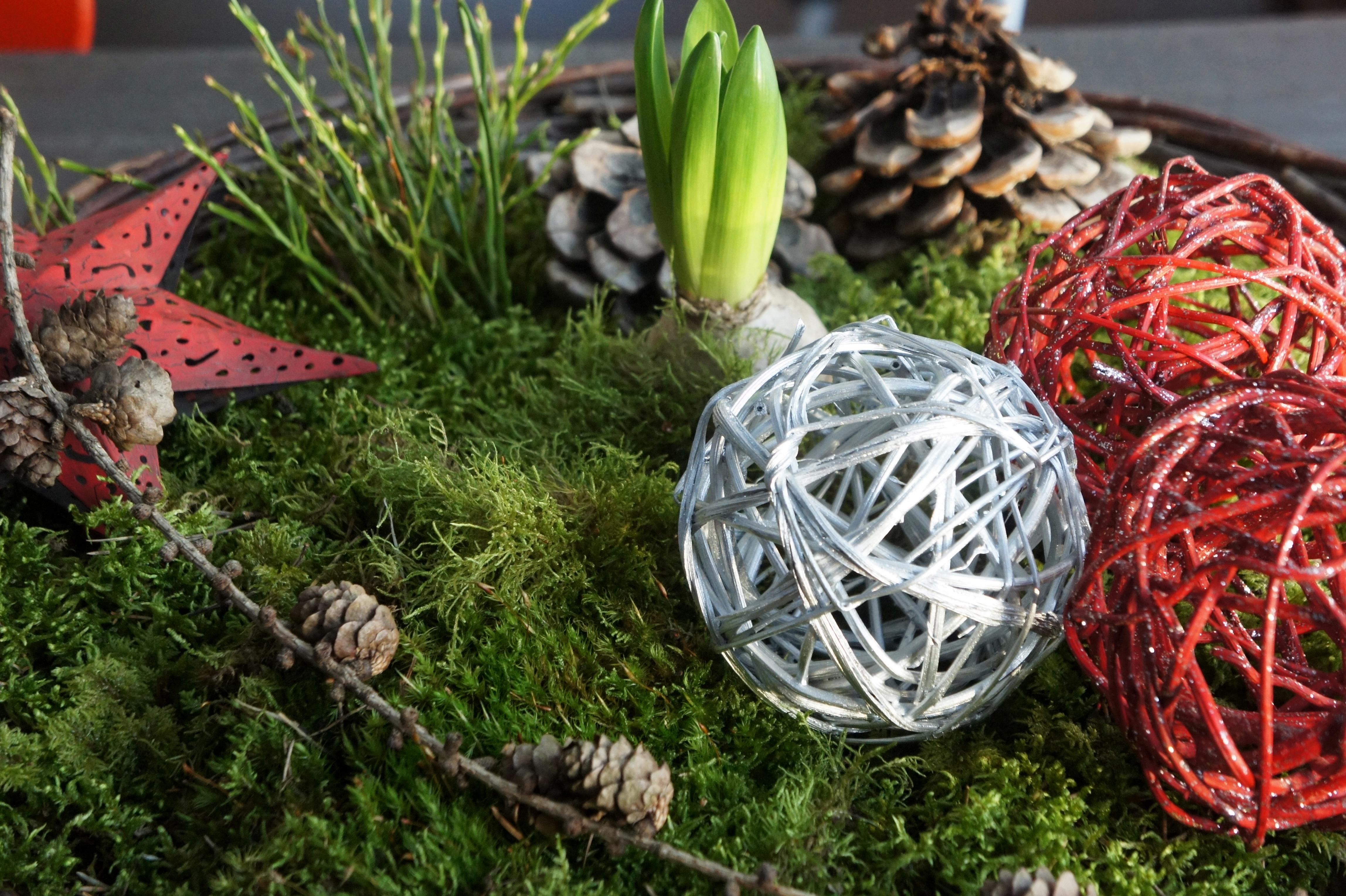 Adventsarrangemang, korg och stjärna från numera nedlagd handelsträdgård, bollar från IKEA, kottar från Italien