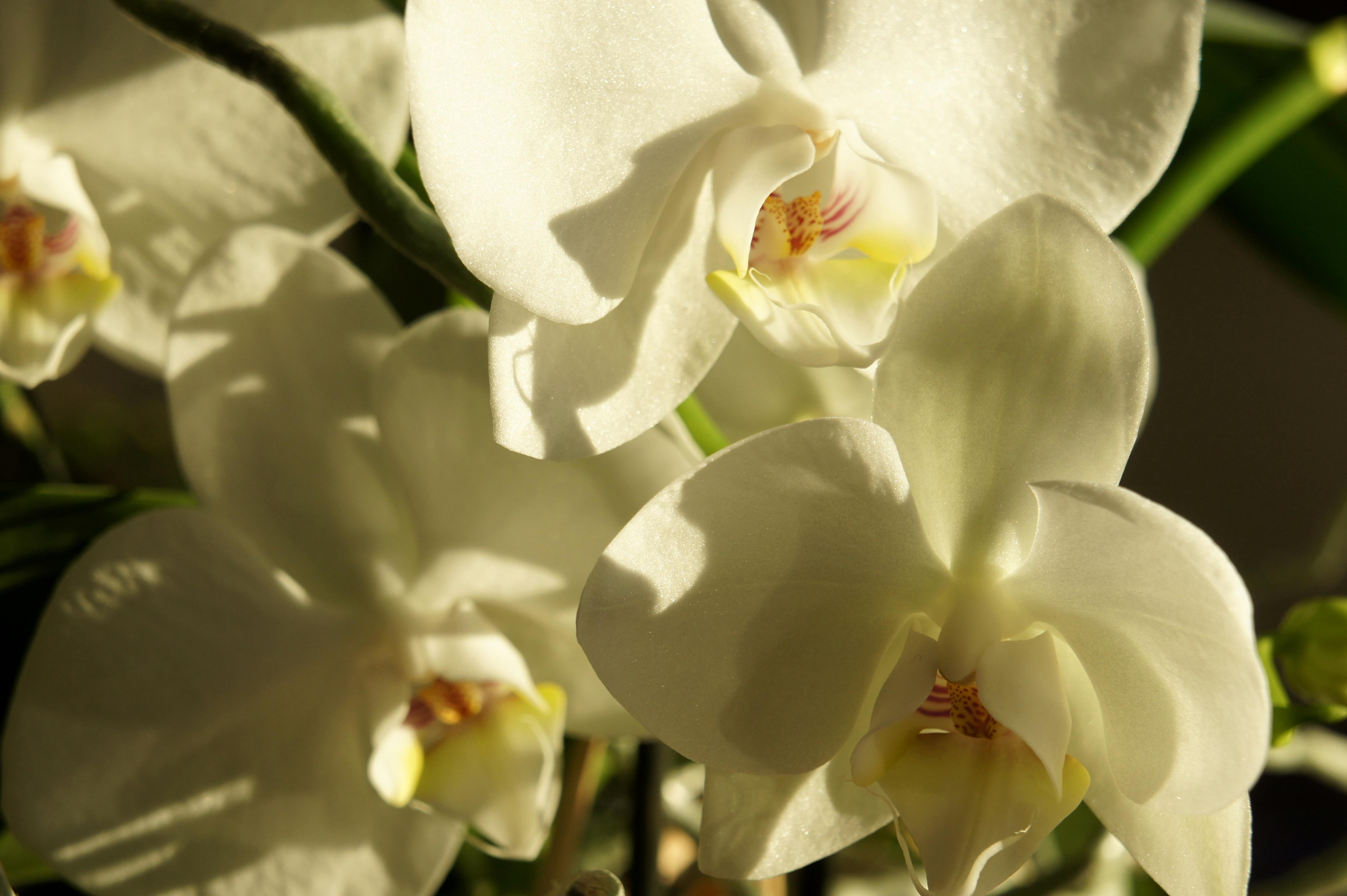 Orkidé i vackert vårljus