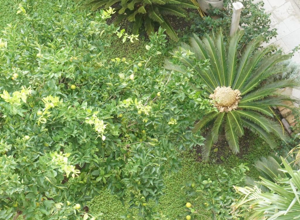 En palm med en rolig blomma innuti