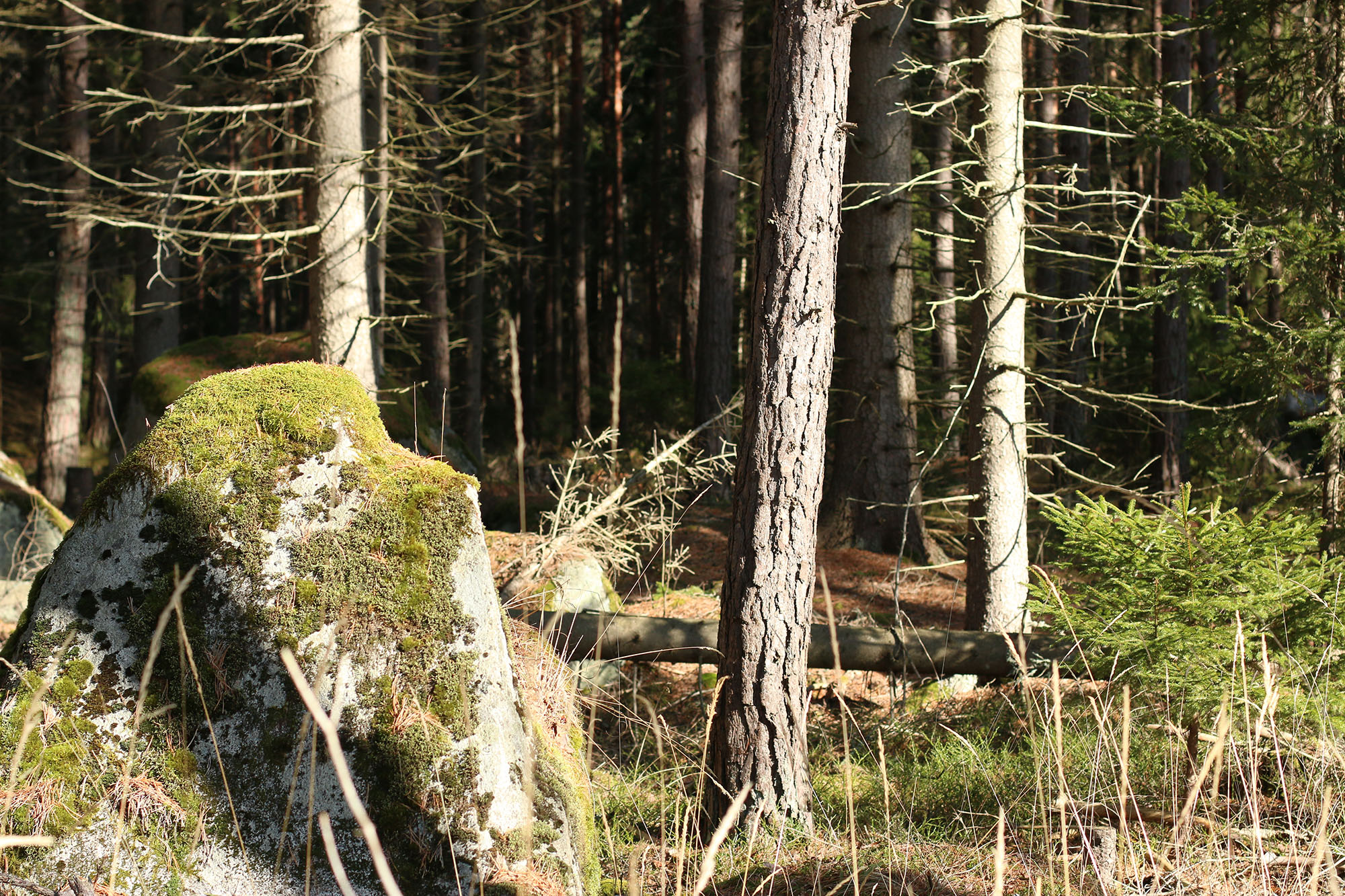 IMG_1224 skogen x