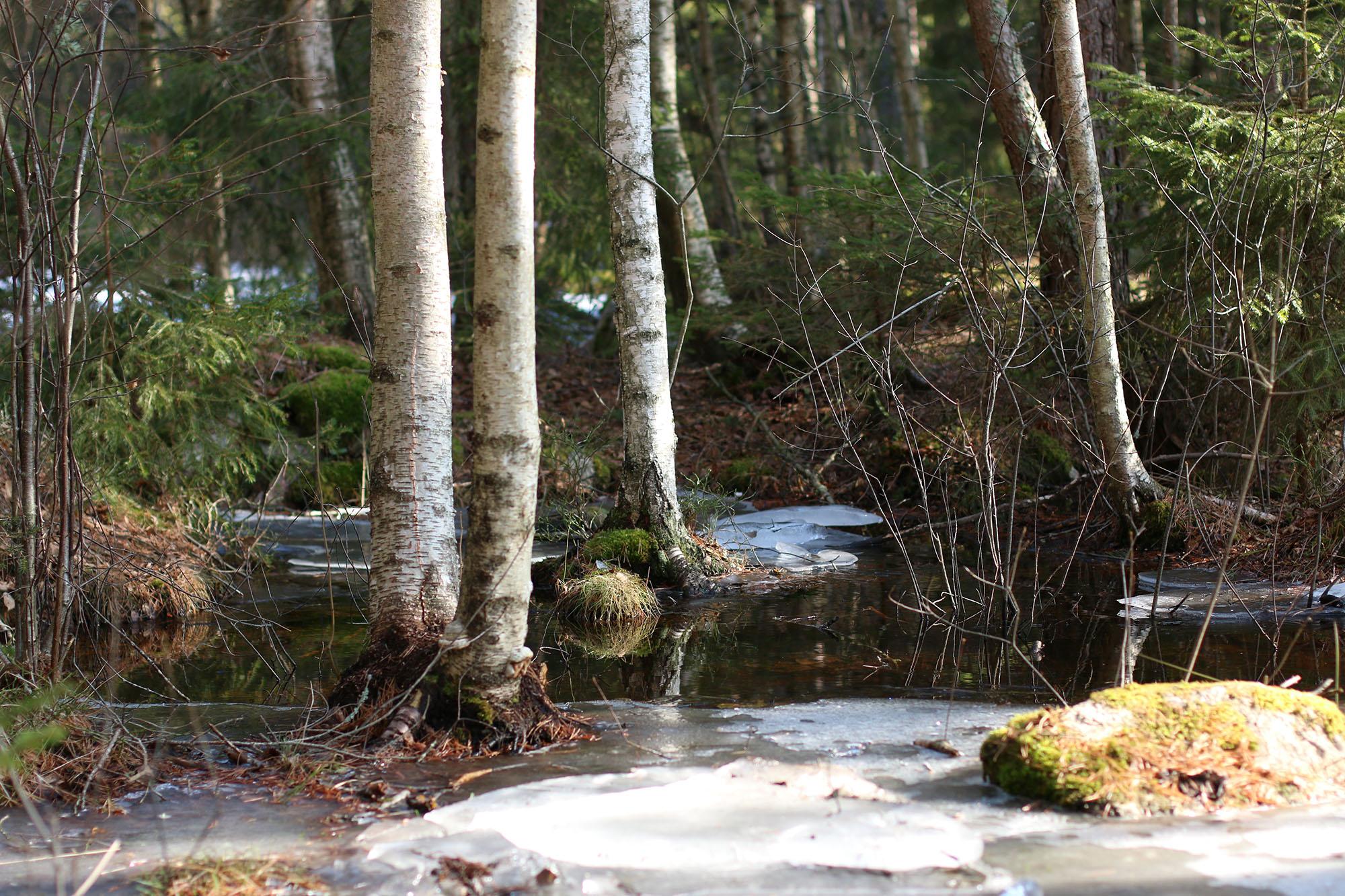IMG_1228 skogen x