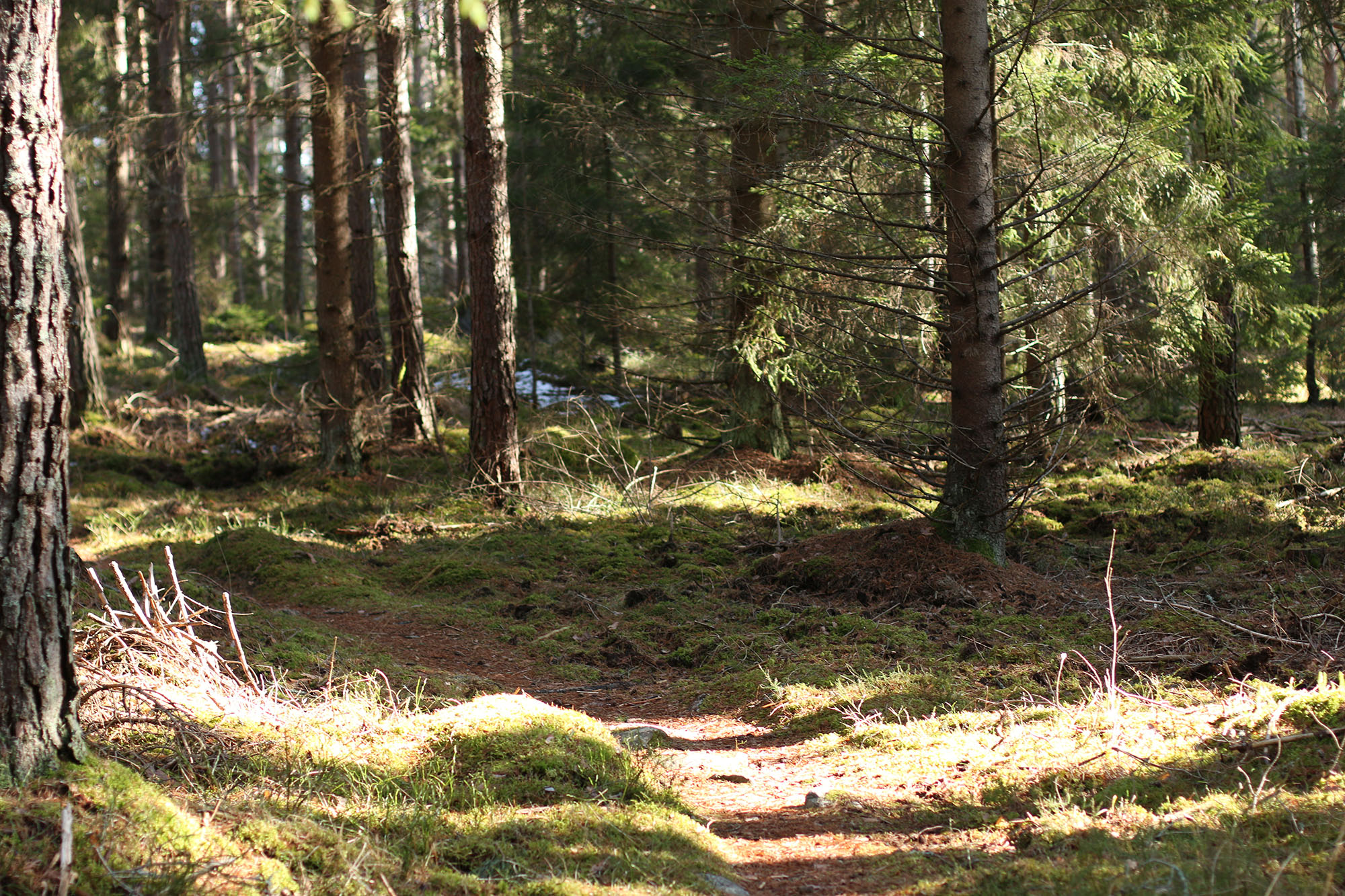 IMG_1238 skogen picknick x
