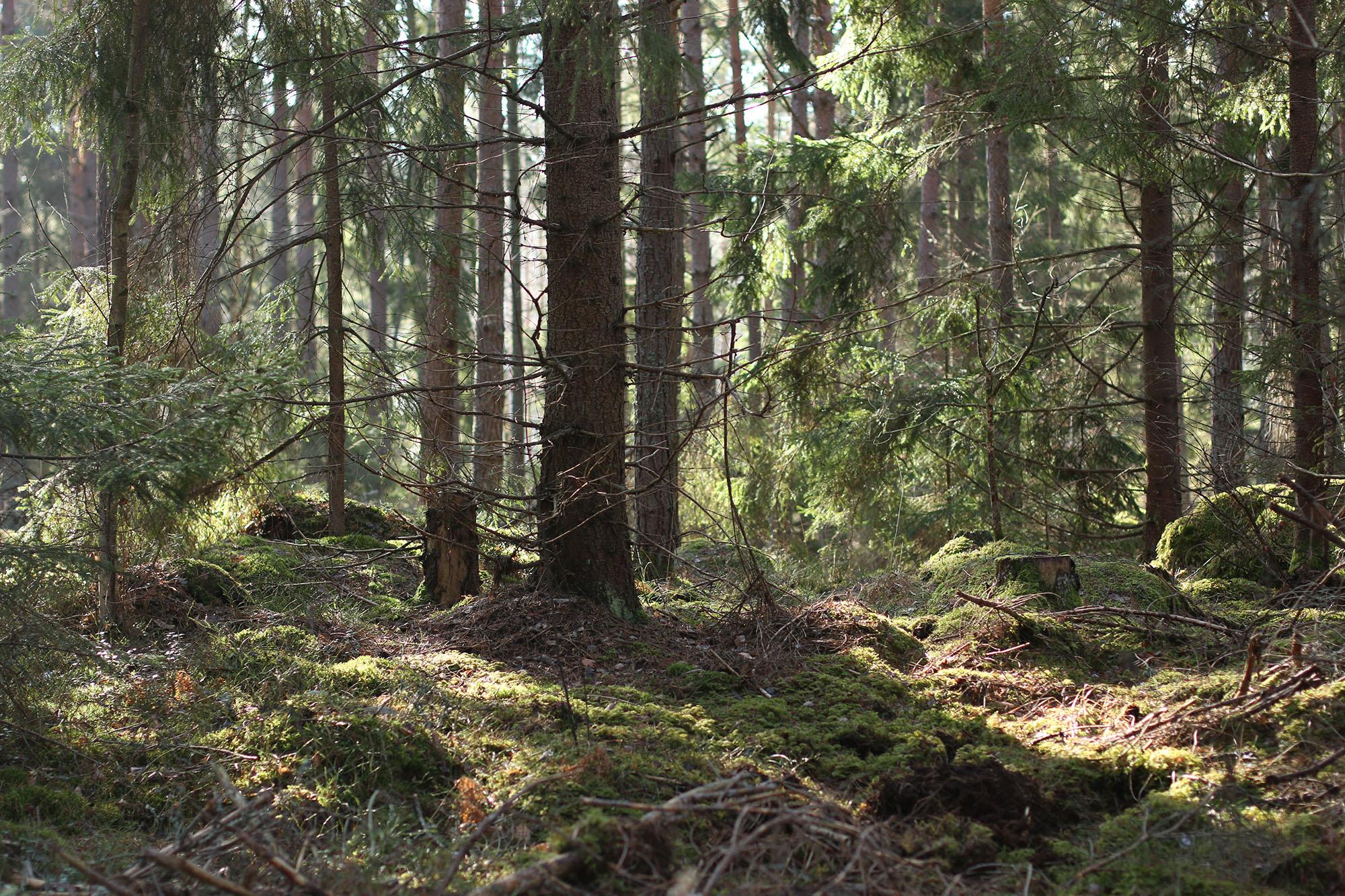 IMG_1240 skogen x
