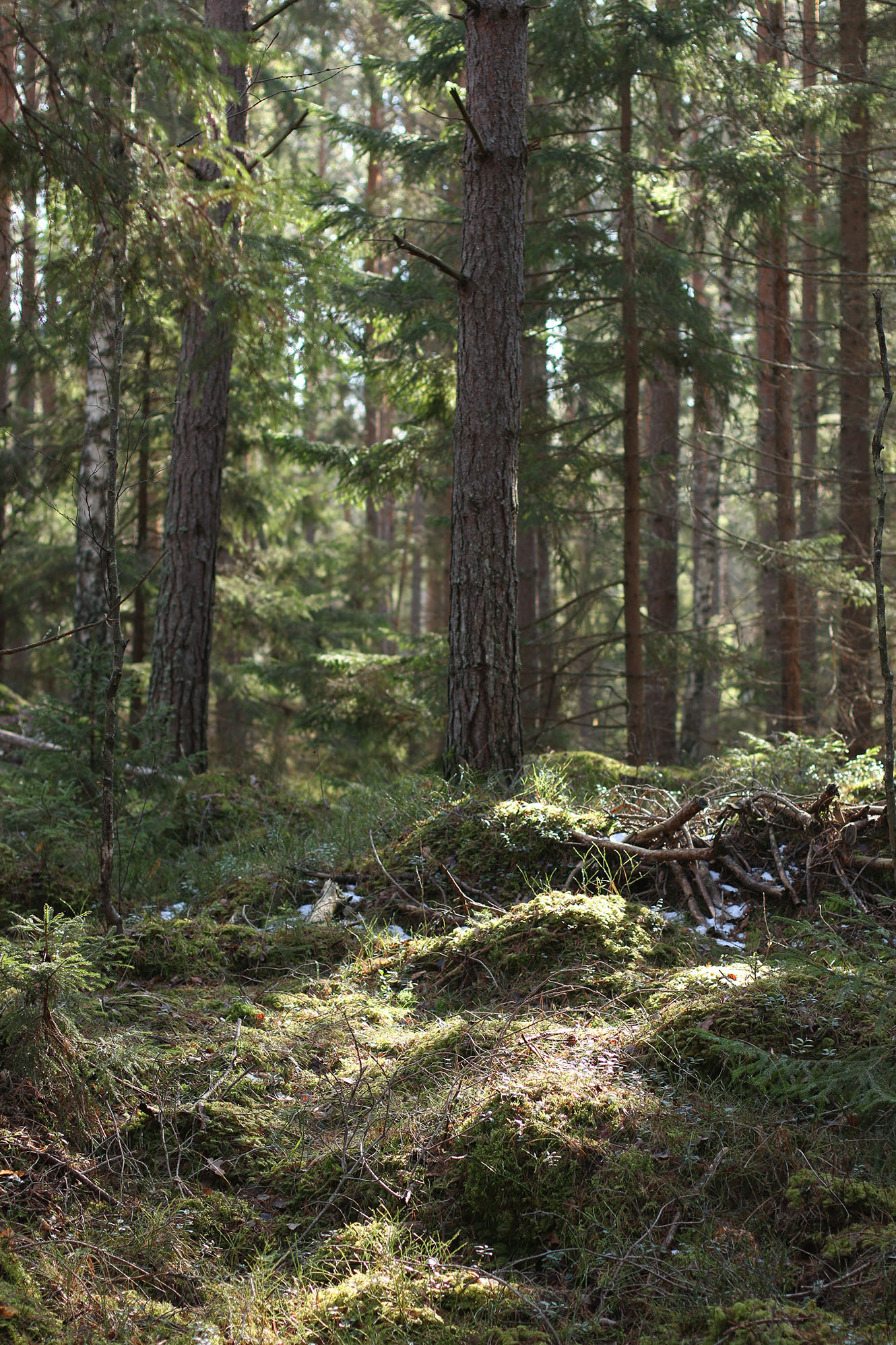 IMG_1241 skogen x