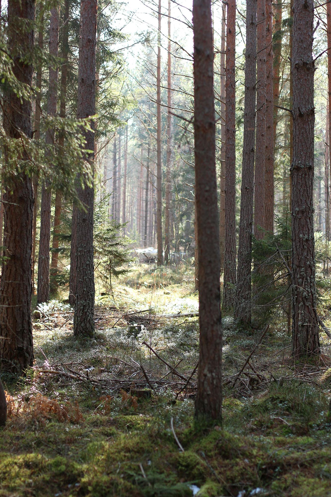 IMG_1245 skogen x