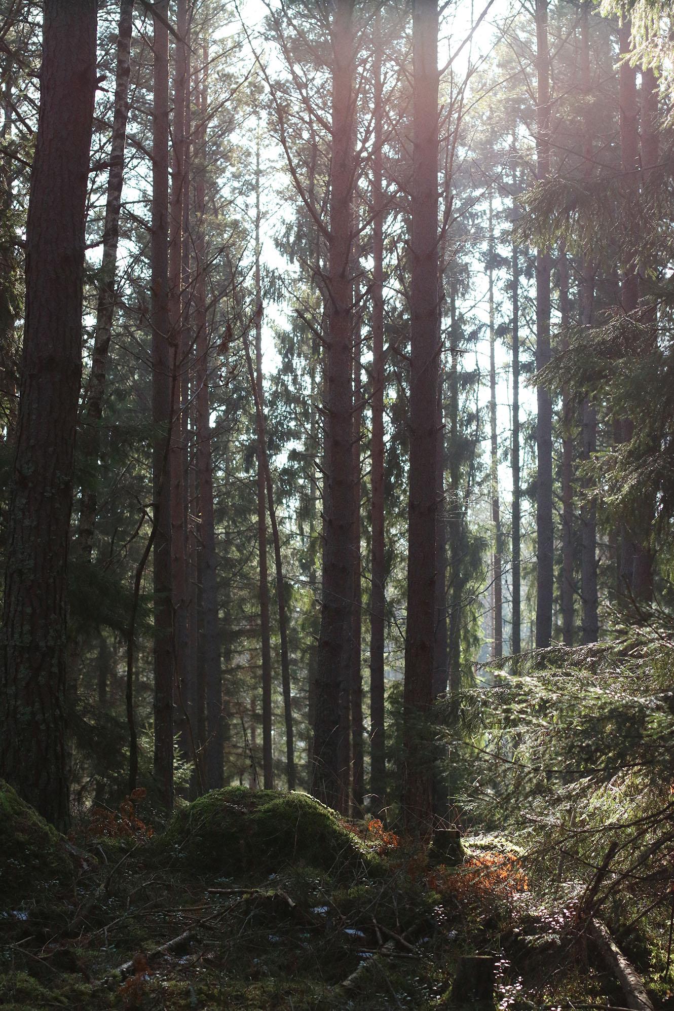 IMG_1288 skogen x