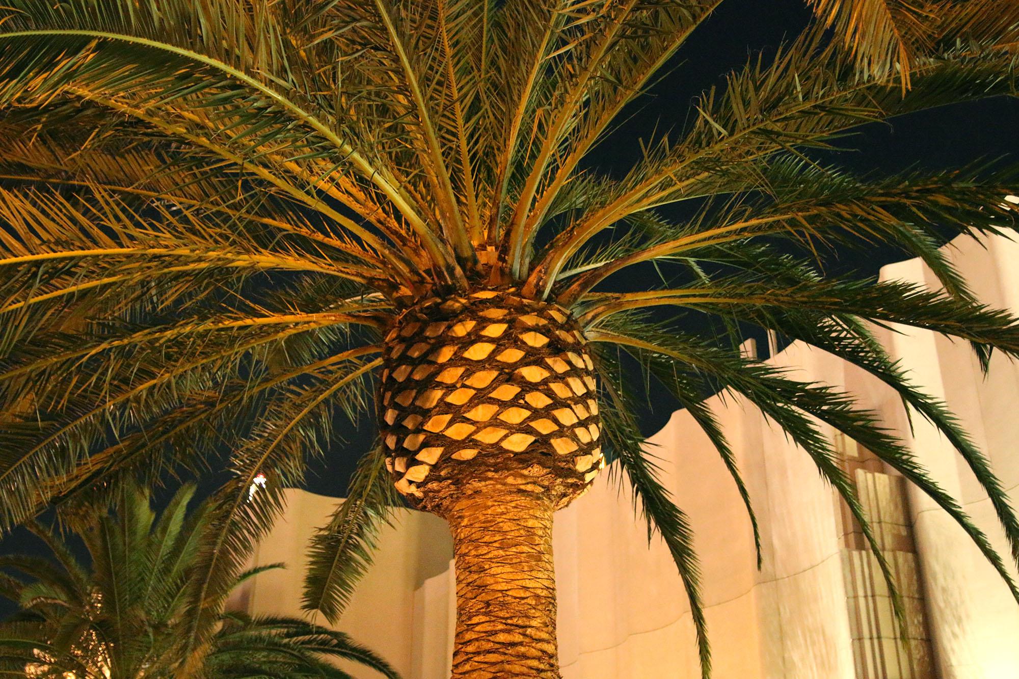 IMG_2149 las vegas palm x