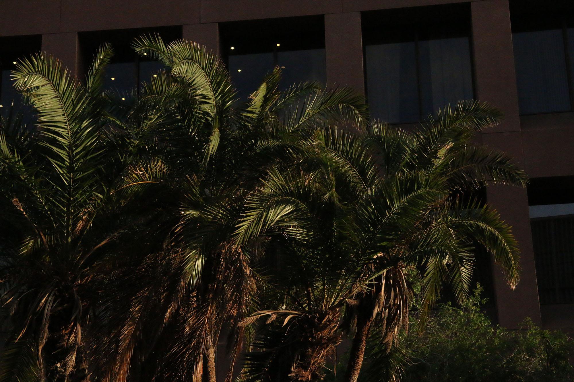 IMG_2428 san diego palmer x