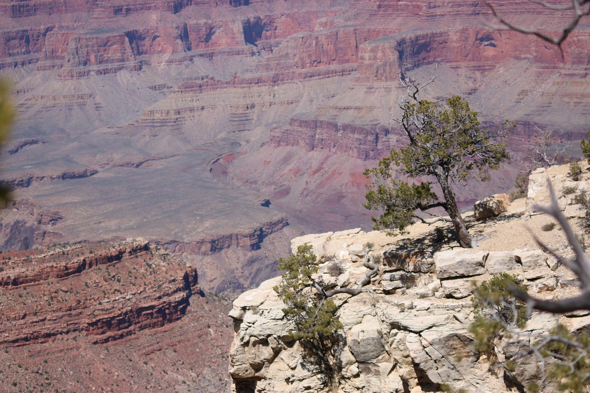 IMG_1667. grand canyon klippa xJPG