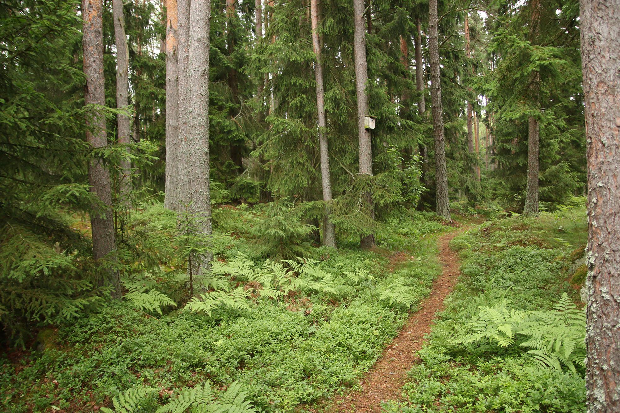 IMG_4083 skogsstig x