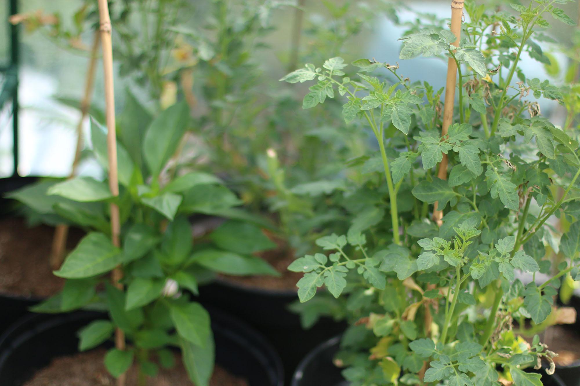 IMG_4199 växthus