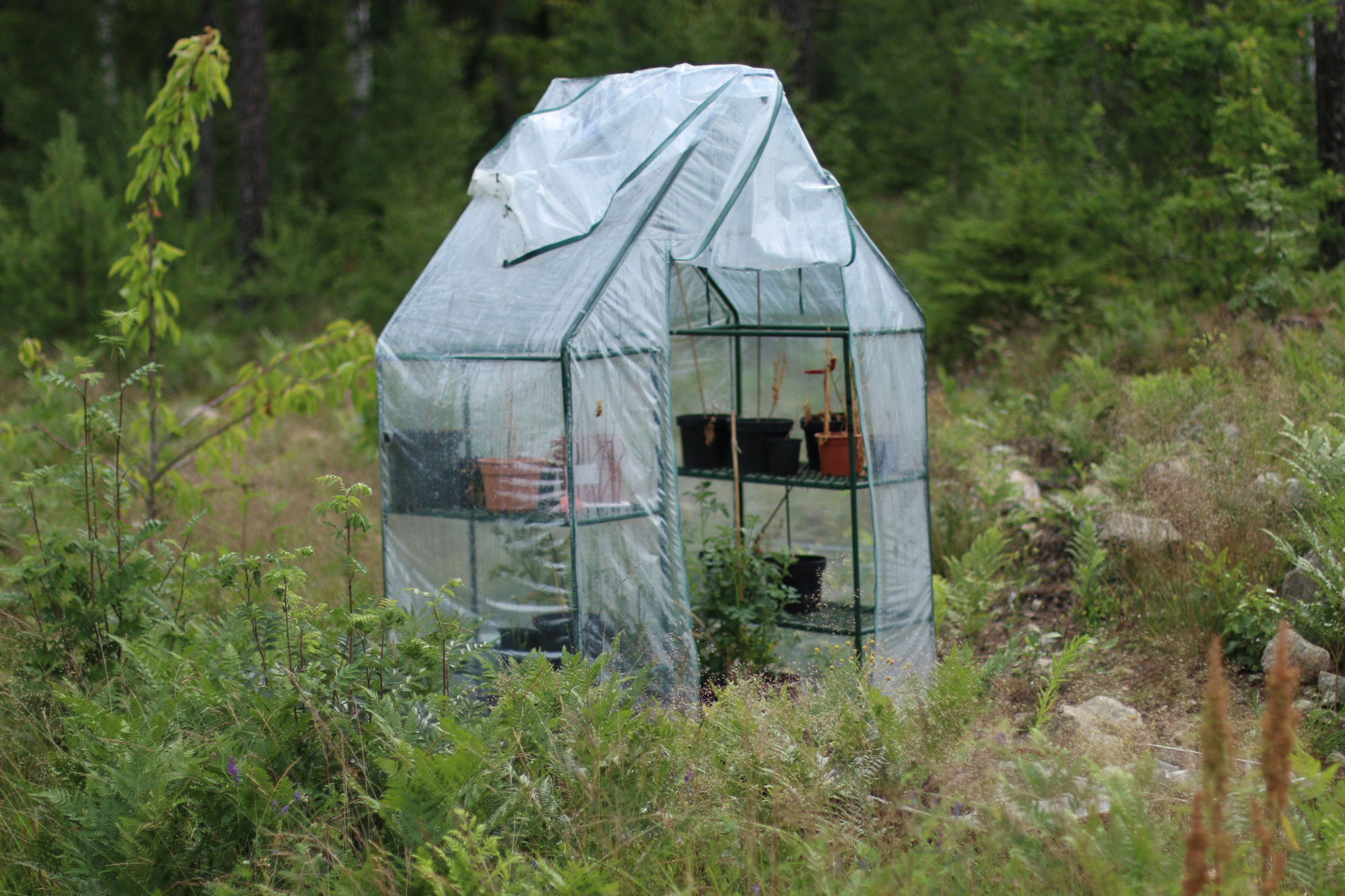 IMG_4205 växthus