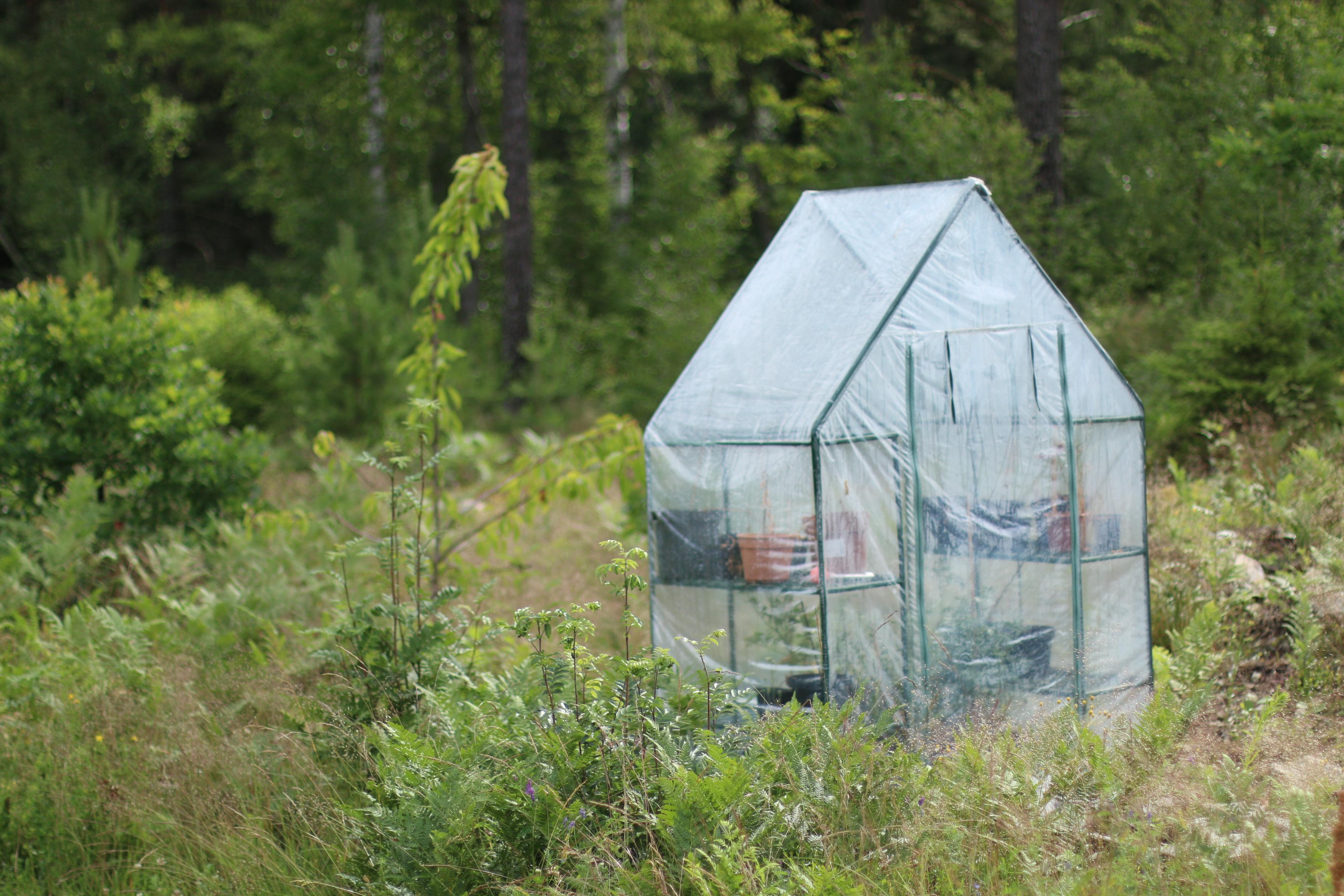 IMG_4216 växthus