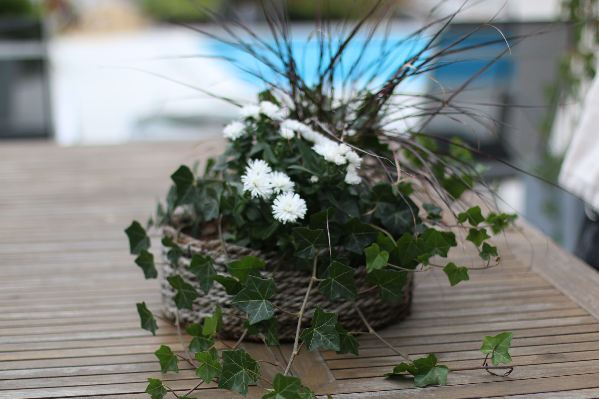 IMG_5622 blomkorg x