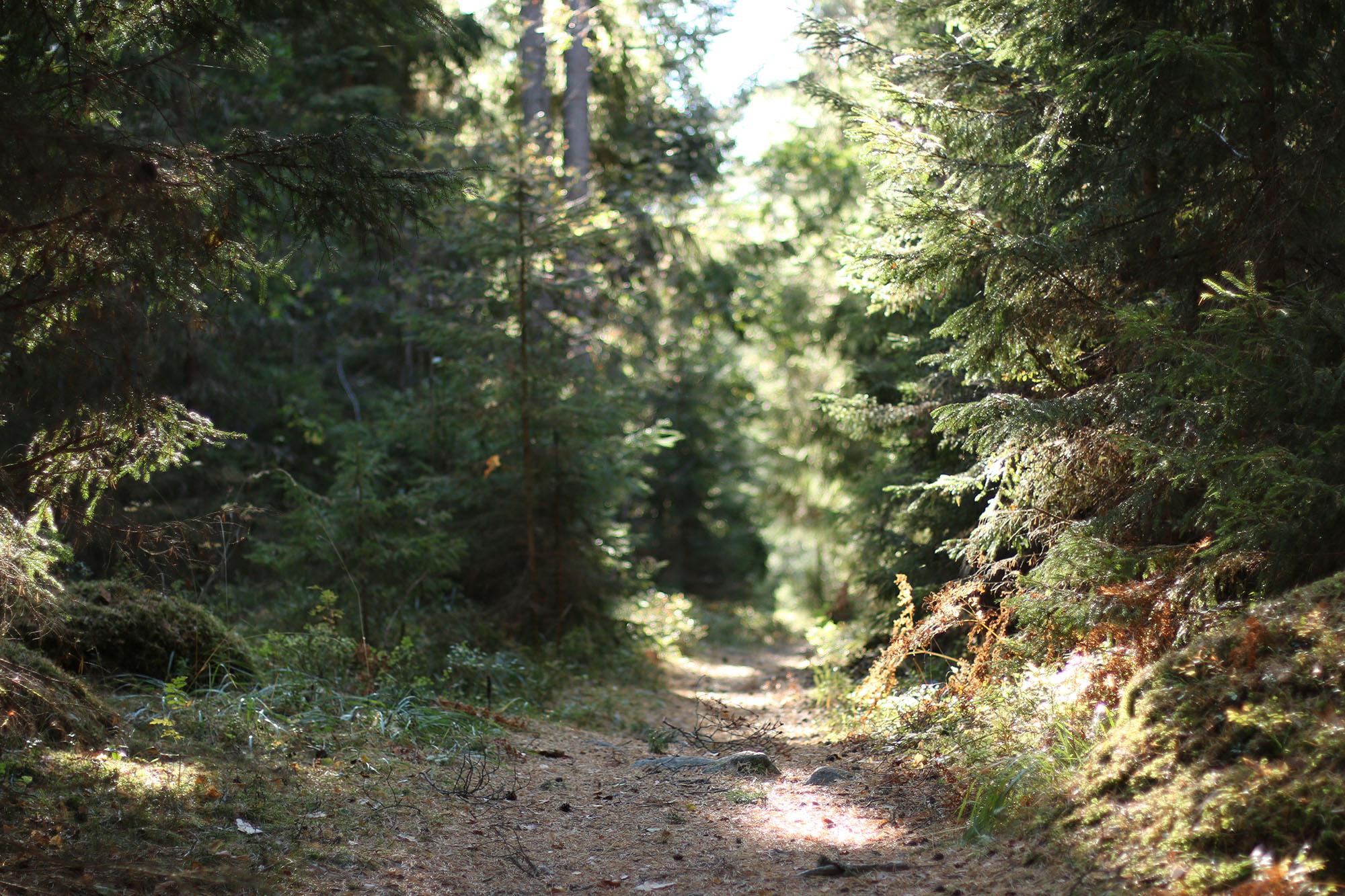 img_6778-skog