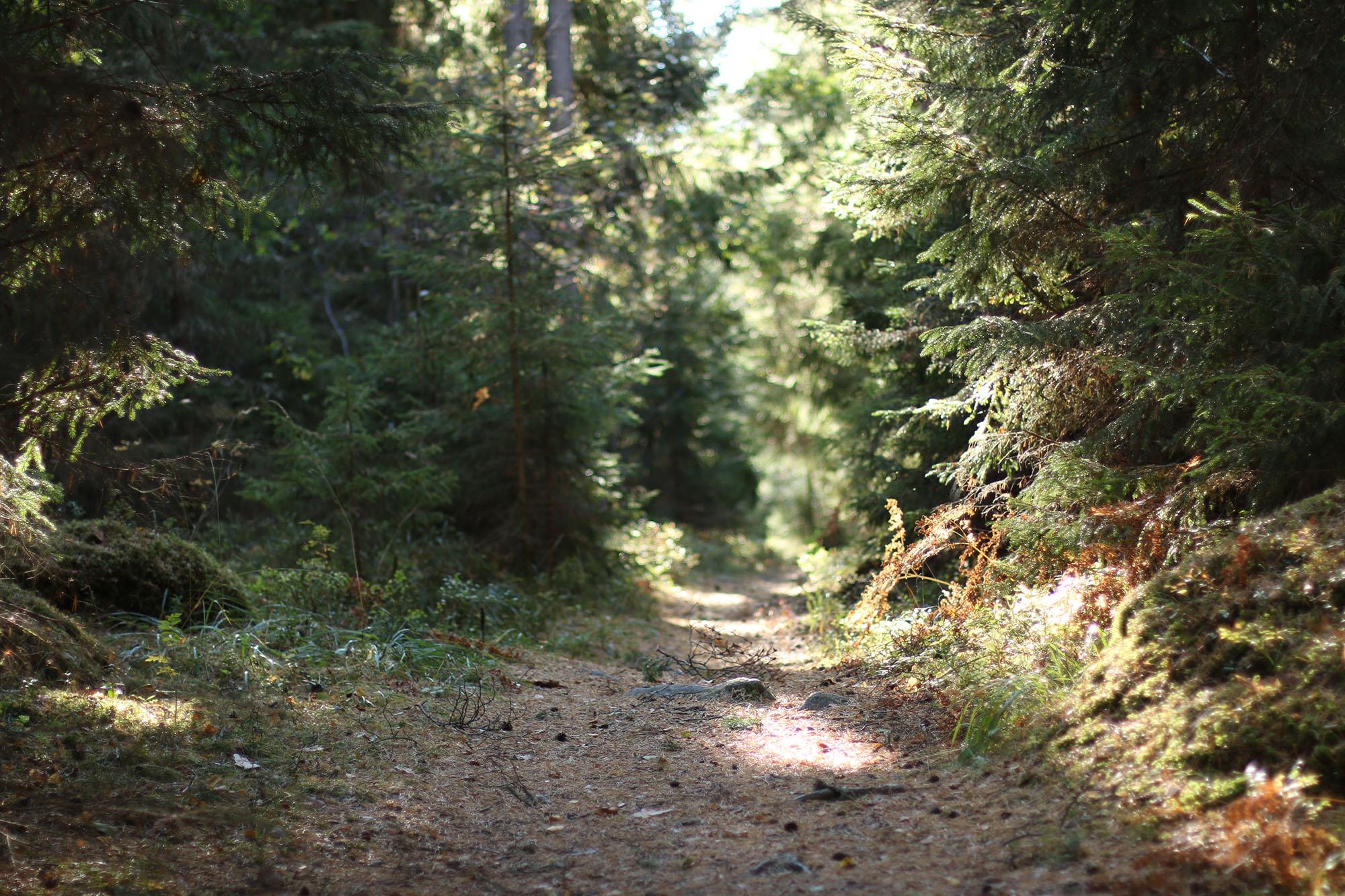 img_6779-skog