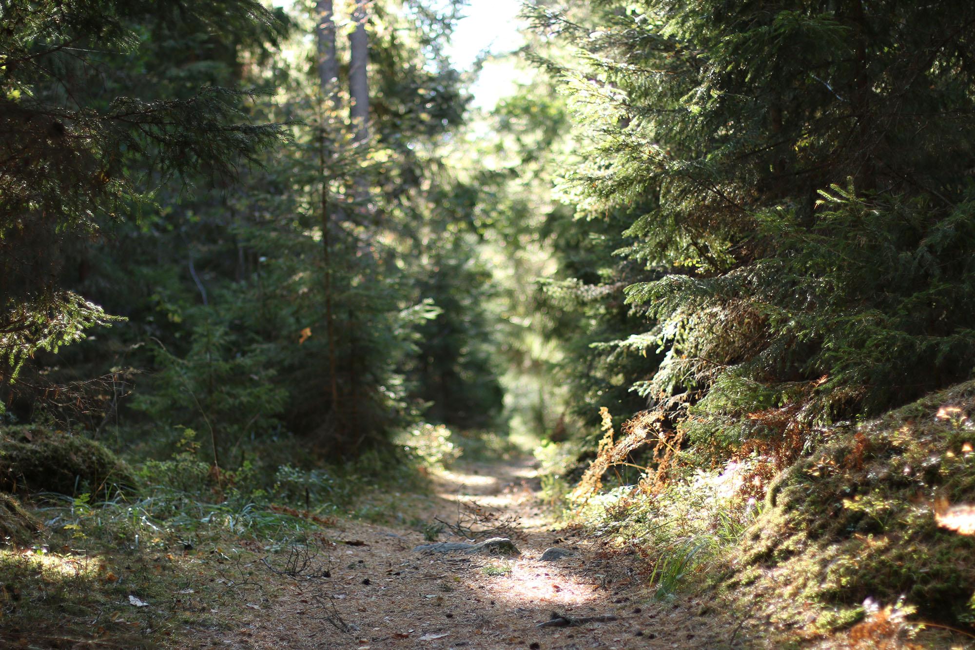 img_6781-skog