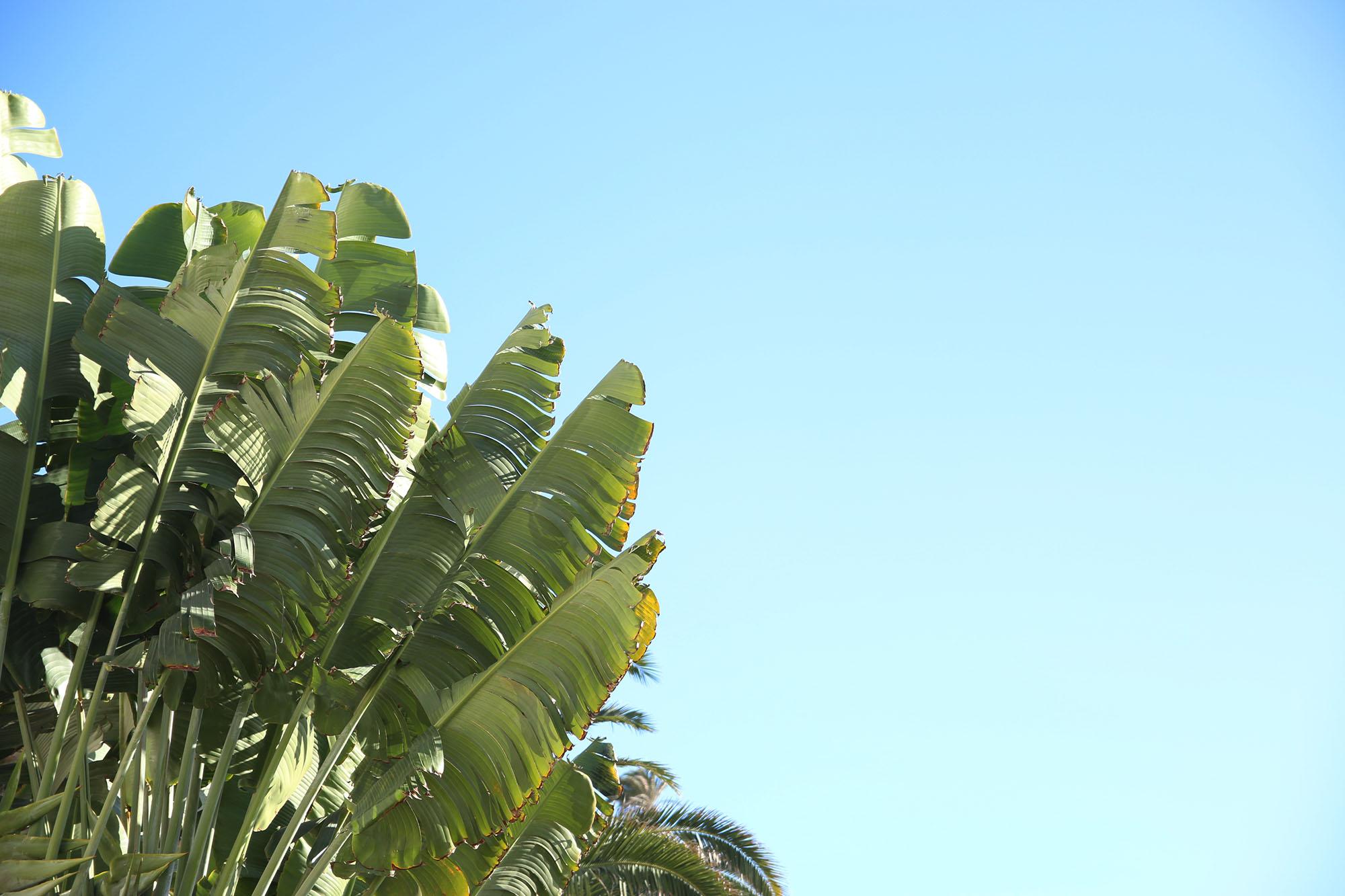 img_7573-palm