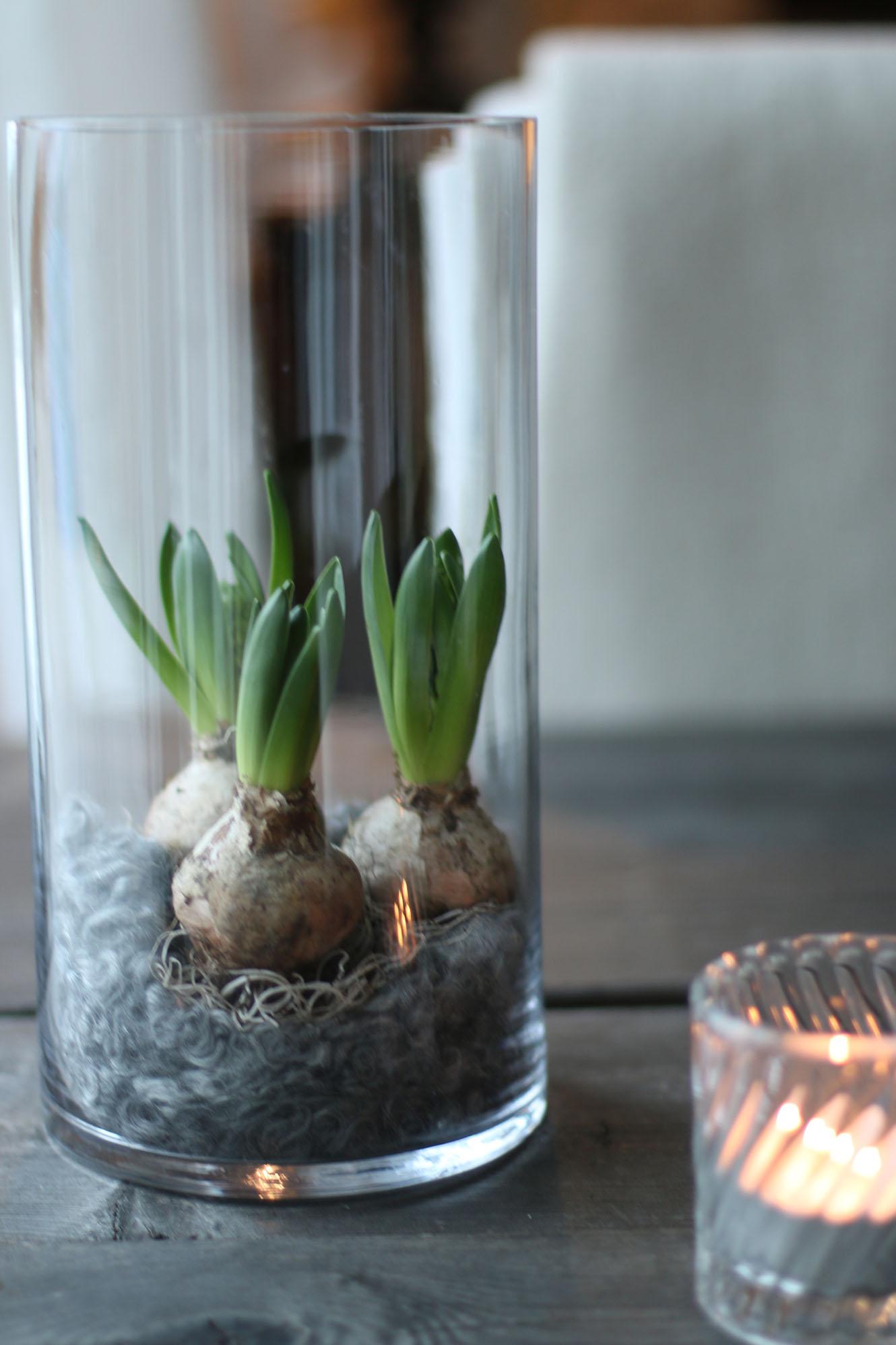 img_7614-hyacinter