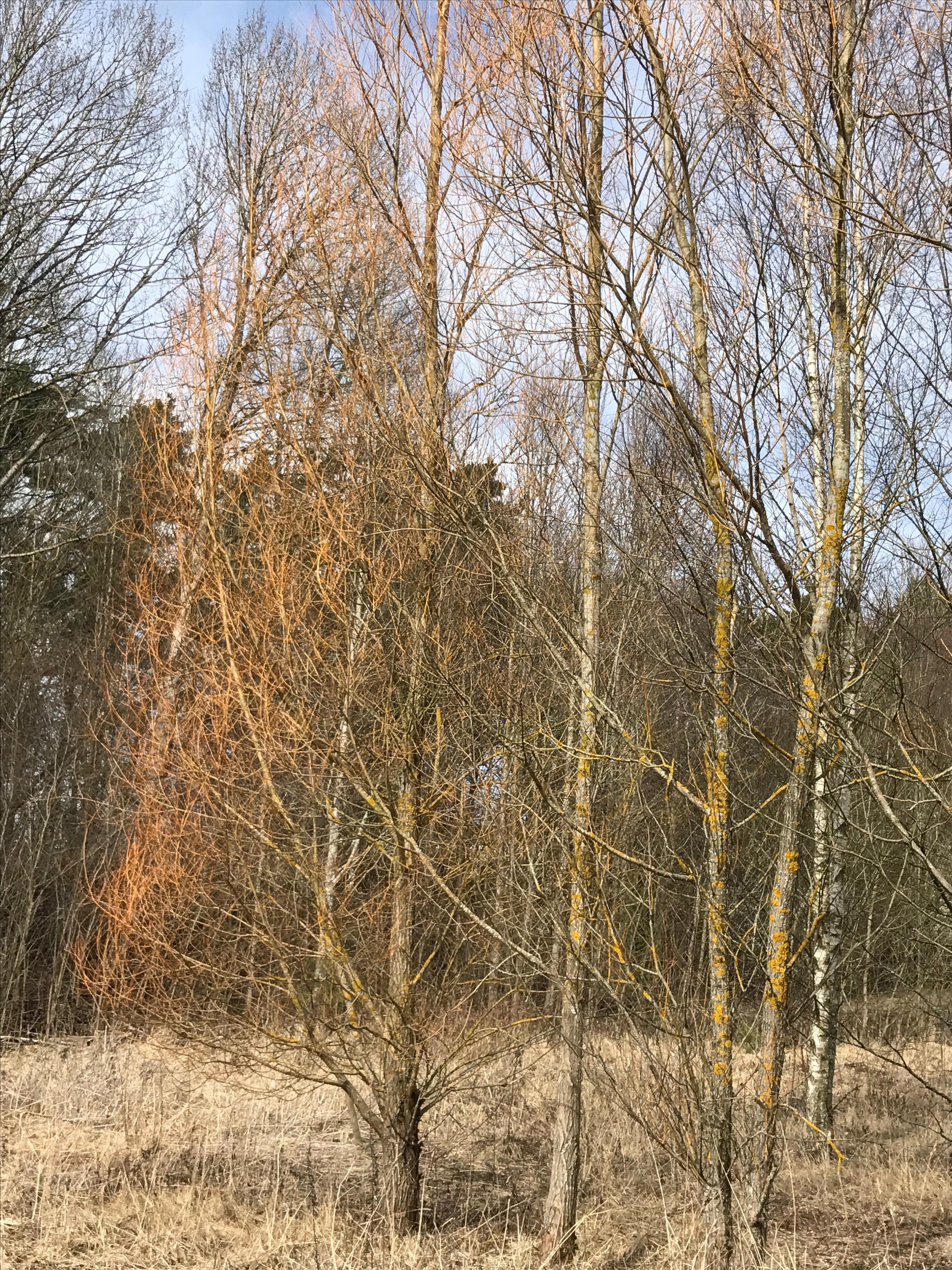 IMG_3722 vandring april