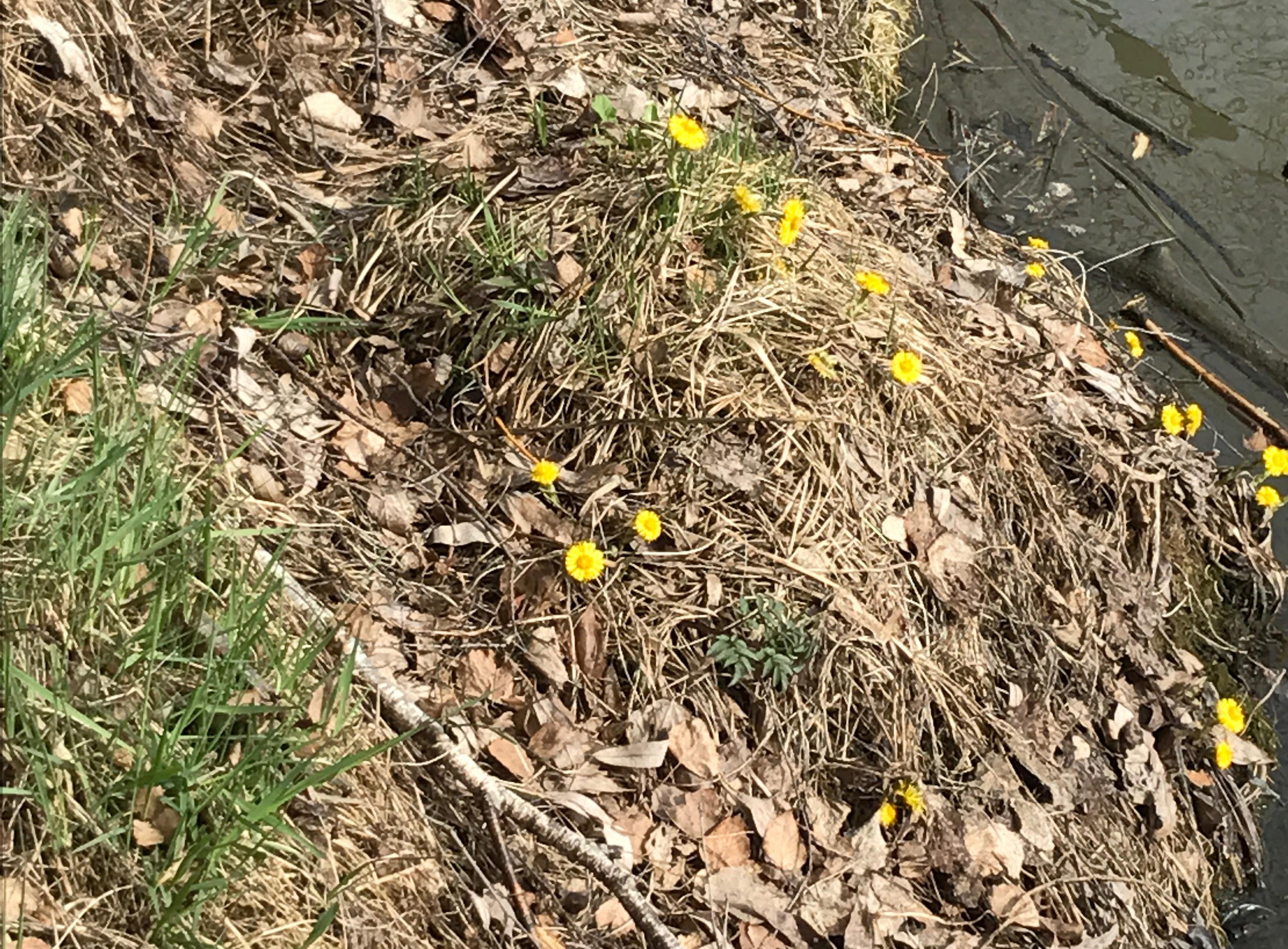 IMG_4092 vandring april