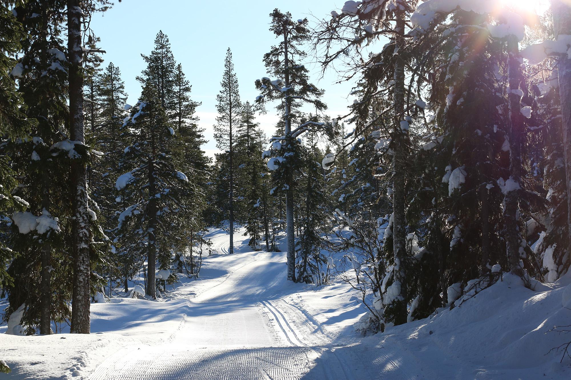 IMG_0558 idre skidspåret