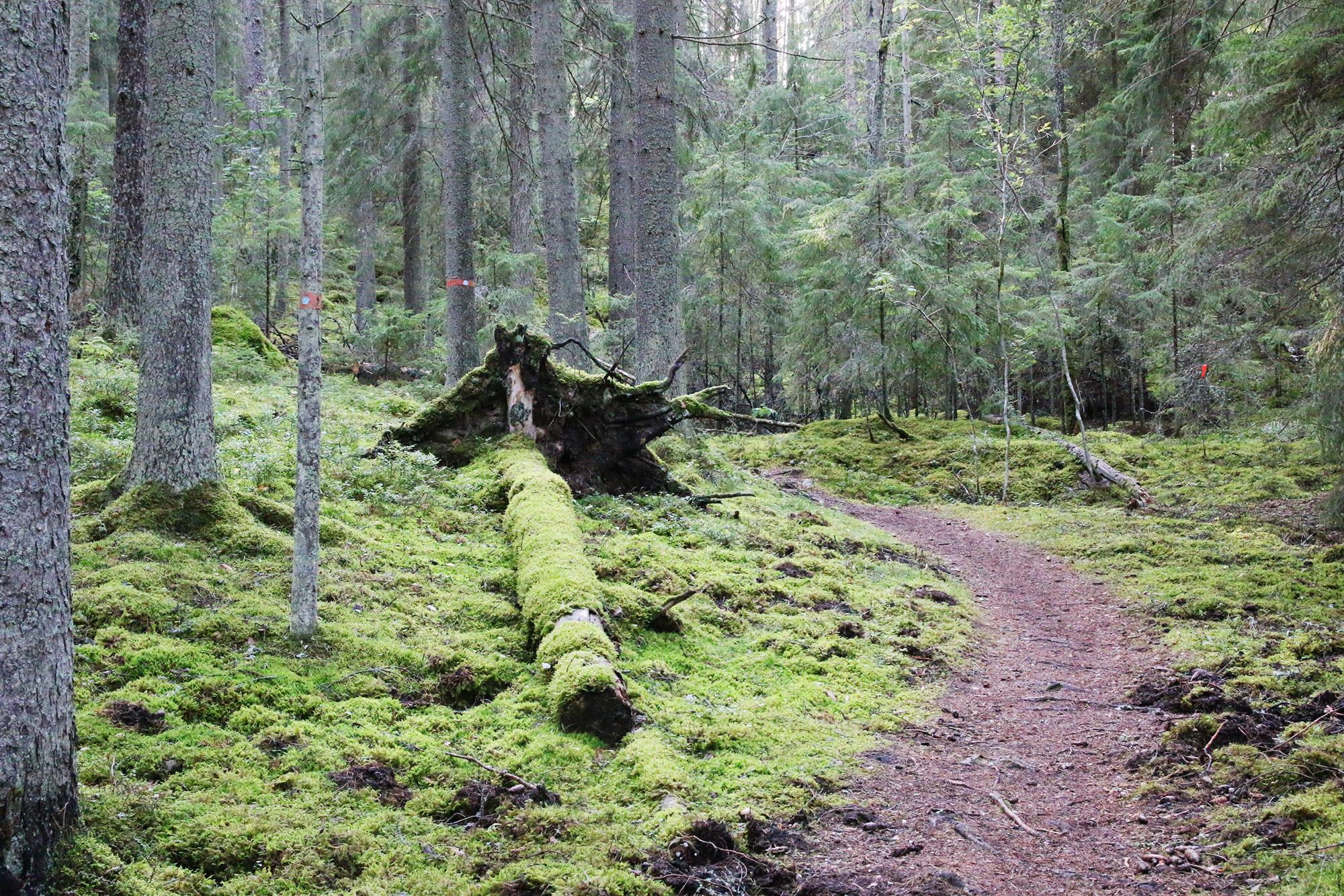 En vandringsslinga vid Sörmlandsleden med start vid Skåttvångs gruva. Magiskt vackert!