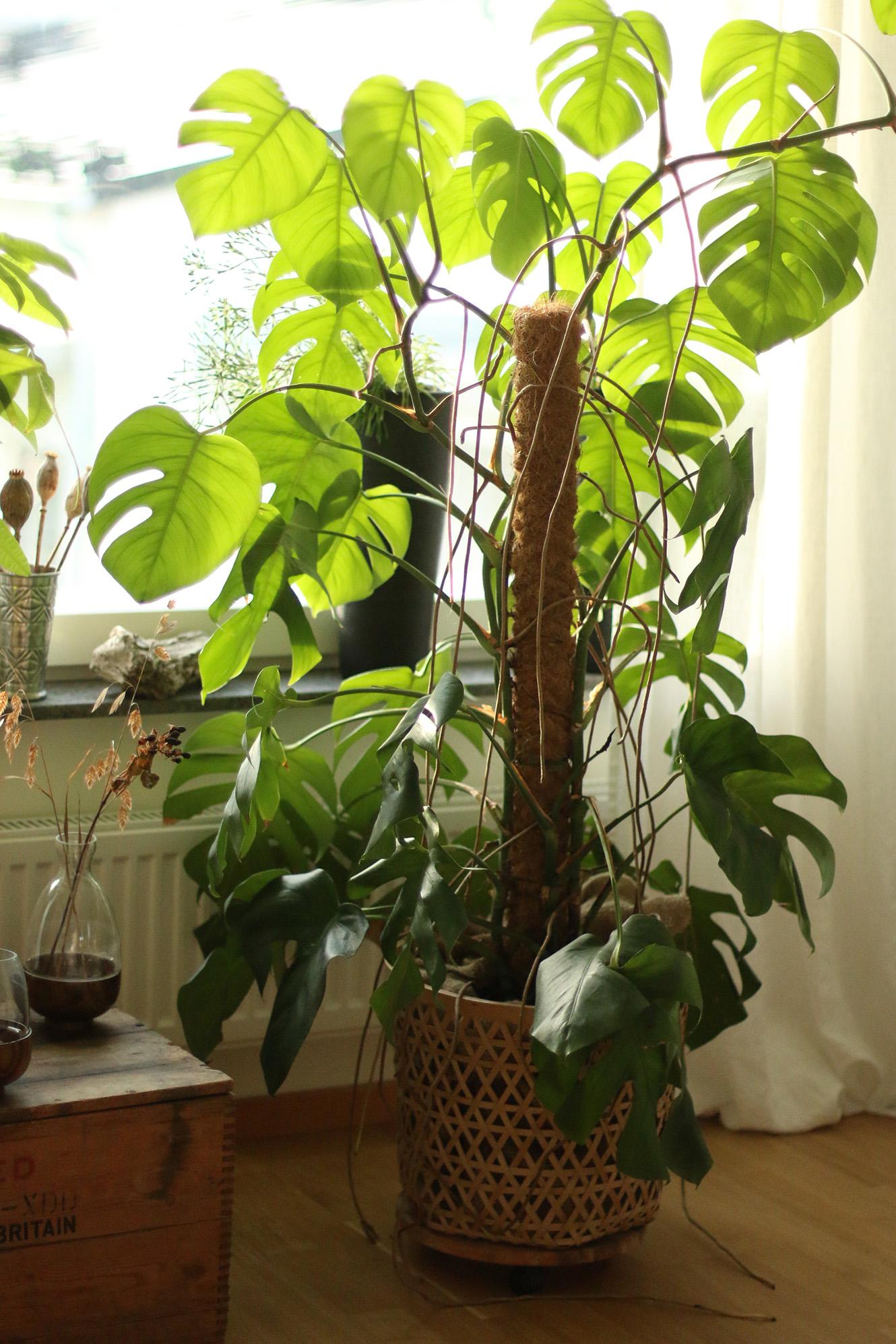 Gillar gröna växter