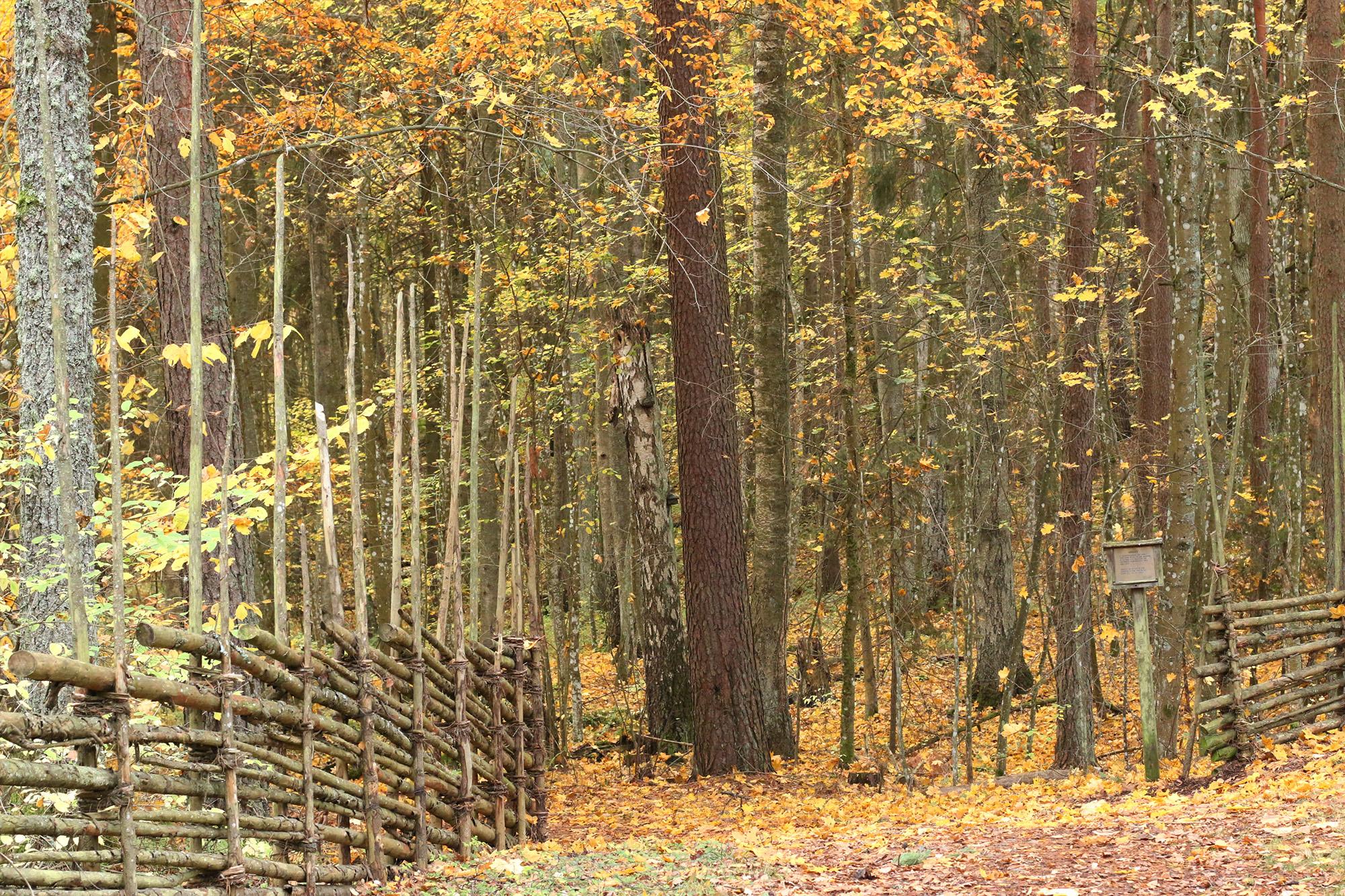 Öppningen in i Gröngarnsåsens urskog