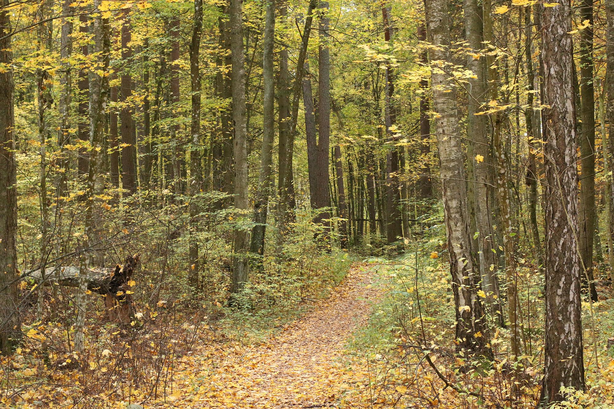 Gröngarnsåsens urskog