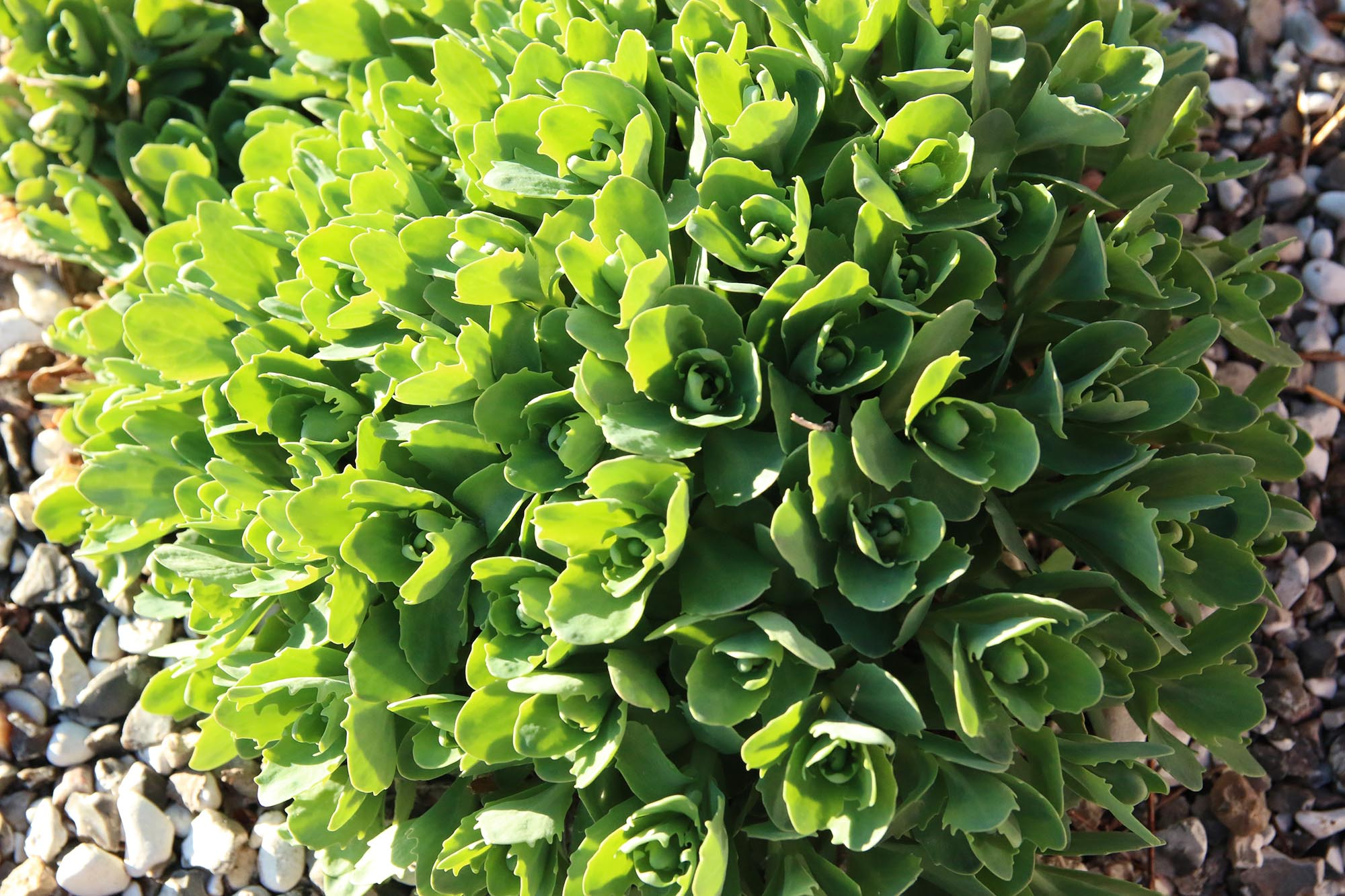 Växter i kvällssol blir lite extra vackra