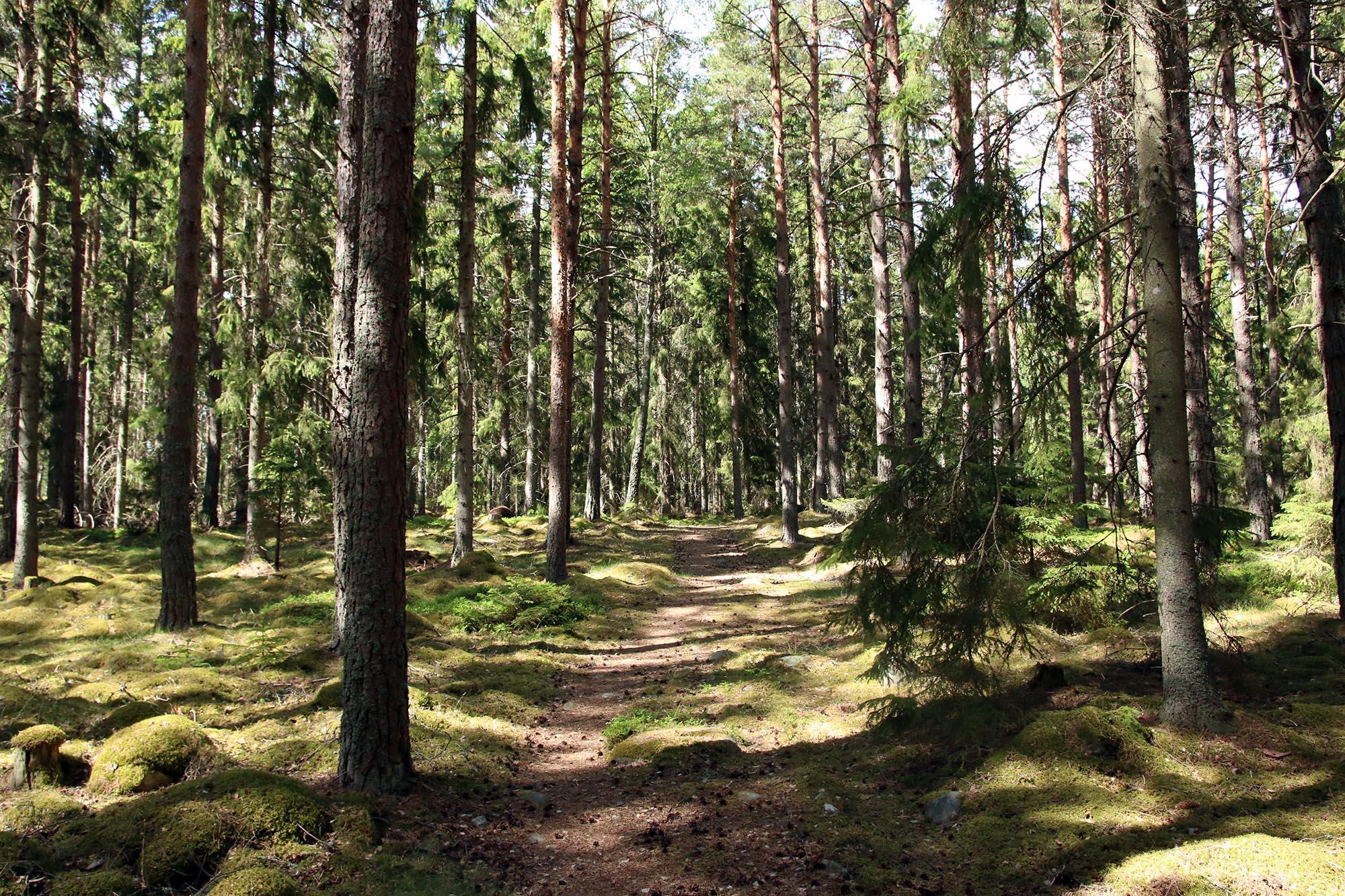 Skogen ger bara man ger den chansen