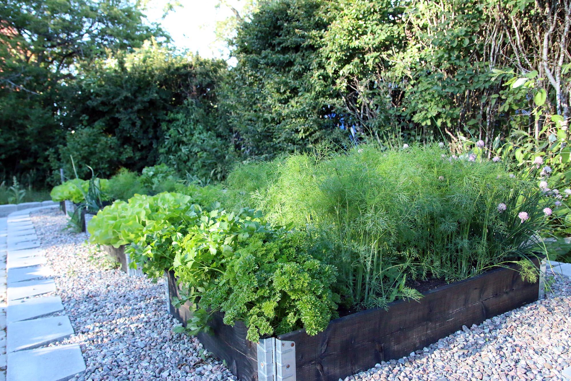 Köksträdgård, sålådor eller planteringsbäddar