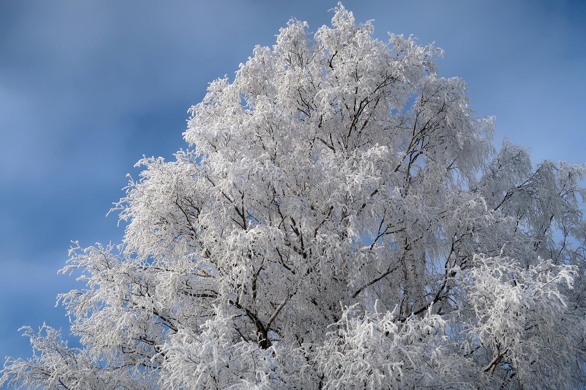 Vacker vinterskrud