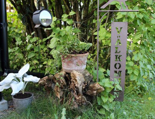 En höstplantering på torpet livar upp.