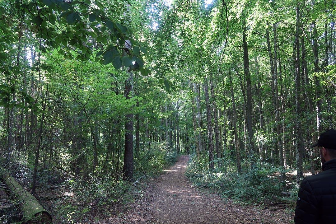 I urskogen på Gröngarnsåsen