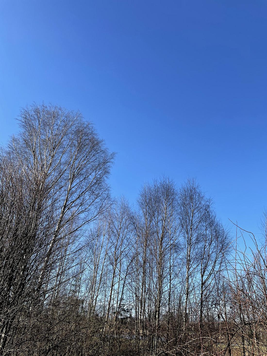 Blå himmel, ett antal plusgrader och en löprunda gav första vårkänslorna