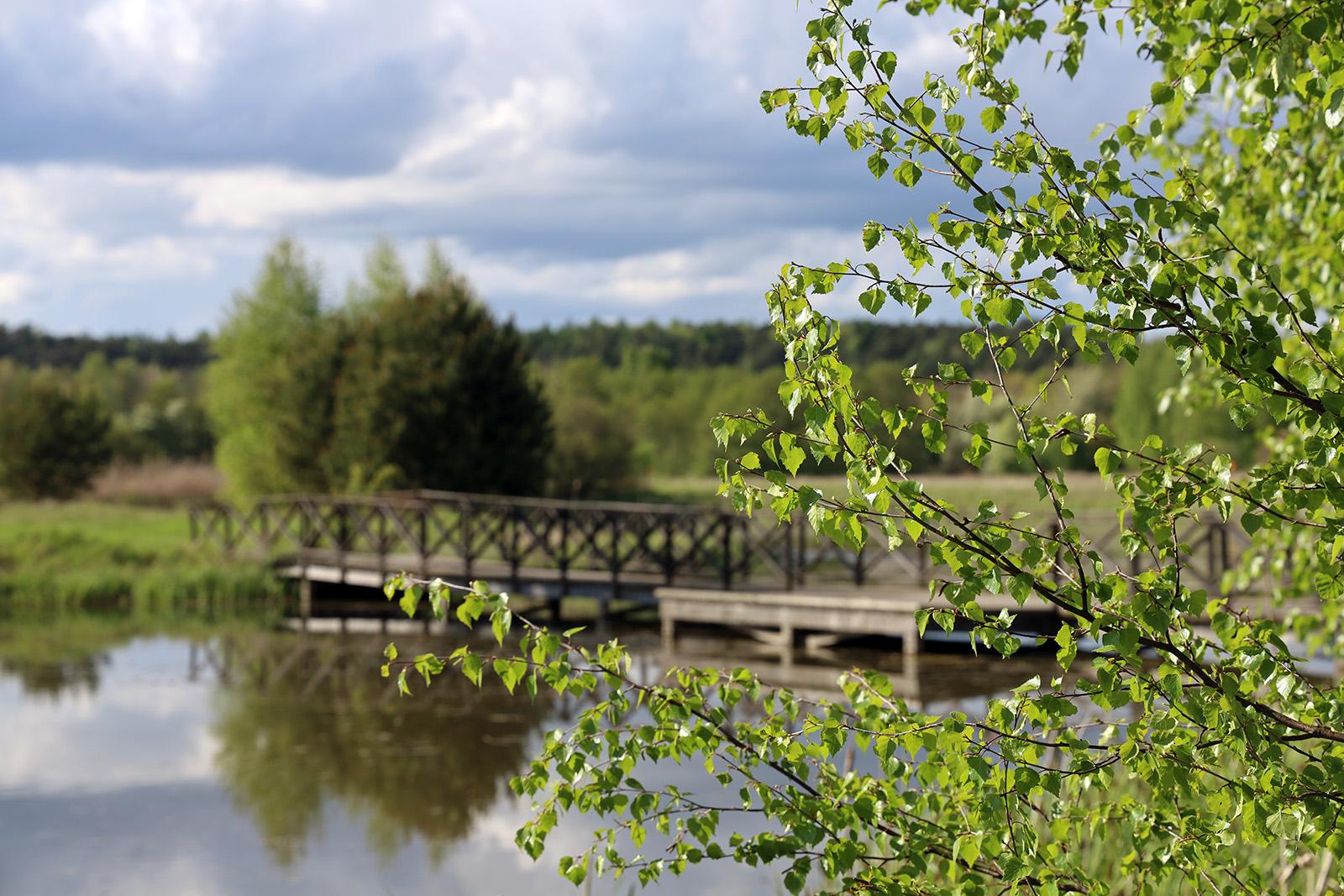 Träbron i Vattenparken